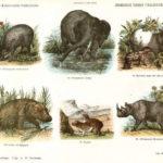 Door Funke in 1868 uitgegeven een serie van 51 nieuwe Nederlandse kinderprenten.