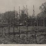 Fruitbomen in de achtertuin