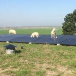 Zonnepanelen op het dak en schaapjes houden het gras laag.