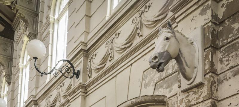 Paardenmeisje maakt filmopdracht