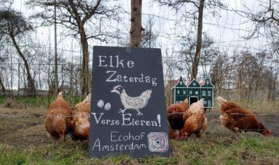 Kakelverse eieren te koop. Foto: ecohofamsterdam.nl